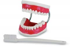 Modèle de démonstration avec brosse à dents  Modèle de démonstration Hager&Werken 167112